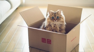 mudanza-gatos-consejos